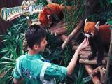 O寒假嗨翻天深圳纯玩3天2晚香港游海洋公园全天迪士尼自由行