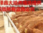 肉牛繁殖基地