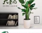 深圳专业绿租摆出售 绿化工程,园林绿化,特价优惠中
