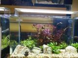 龜與熊貓水族服務魚缸上門草缸造景