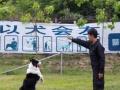 潮阳力泓宠物训练