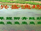 翼城县鱼苗供应商批发淡水鱼、观赏鱼苗、渔场直售、规格齐全