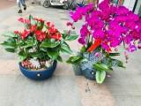 杭州拱墅專業綠化養護,鮮花設計擺放 綠植租賃