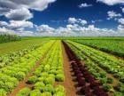 量子世界与未来农业结合趋势