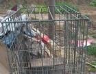 自选钢筋焊接的狗笼