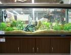 昆明快速上门保洁清洗鱼缸 鱼缸造景 鱼缸维修 鱼缸清洗维护