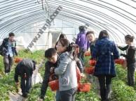 上海农家乐一日游推荐 采草莓摘西瓜 钓龙虾吃土菜 划船烧烤
