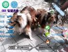 中国较大苏格兰牧羊犬繁殖基地 百度一下唯缘犬舍