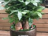 上海鲜花绿植开业乔迁花篮各类插花求婚布置