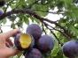 杭州萧山水果园葡萄采摘 公司团队活动