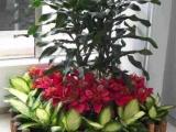 呼和浩特花卉绿植租摆专业设计