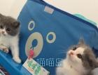 三亚喵喵岛(猫社)优质宠物猫