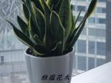 温州苍南园林园艺设计绿化工程养护