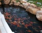 广州锦鲤鱼池清洗,前进路洗鱼池 ,清理鱼池价格