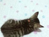 超级乖小猫求靠谱领养