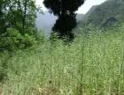 转让农用生态梯田 400亩15年 适有机农业药材水果蔬菜