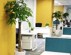 全市超低价 办公楼绿植租赁 厂房园林绿化养护与施工