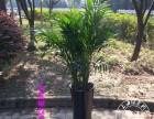 黄浦专业花卉租赁 绿植租摆 植物租摆 鲜花绿植