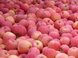 进口 厂家直销浓缩苹果清汁原浆 原料