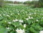 山水连饶、一湖半山、鱼跃鹭鸣-石河子桃源旅游区