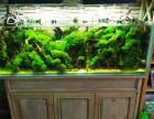 鱼缸清洗 鱼缸搬运安装 各类观赏鱼出售