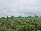 缅甸。密支那。歪莫地 土地 30000平米