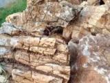 提供各种园林景观石及石材