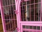 加粗加固方管巨型犬笼粉色
