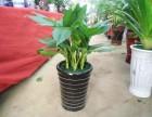 越城区开张花篮鲜花速递发财树绿萝绿植