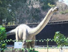 大型仿真恐龙展品租赁