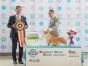 双血柯基犬 专业繁殖 可上门挑选 协议质保