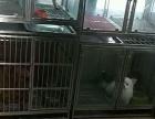 南开区地铁站旁经营三年宠物店带客带货转让