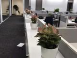 崇文專業室內綠植租賃寫字樓商務樓植物租擺綠化綠植租擺