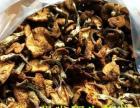 批发野生蘑菇