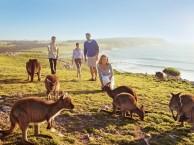 移民澳大利亚,无语言 学历要求,获身份速度快