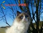 ROYALYANG猫神