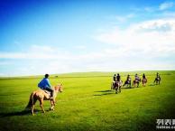 呼伦贝尔旅游包车,深度自助游,带您来看最美的草原!