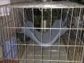 1.6米长的大狗笼