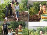 太湖西山随意农家推出乡村生态旅游