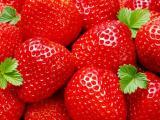 黑龙江草莓苗多少钱 质量优良