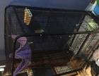 出售大型 松鼠笼 龙猫笼长77宽51高137cm