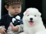 武汉那里有萨摩耶犬卖 武汉萨摩耶犬价格 武汉萨摩耶犬多少钱