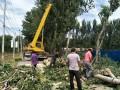 专业修树伐树移树 园林绿化