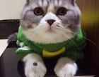 重庆哪里卖健康的折耳猫 重庆折耳猫的价格是多少 折耳猫好养吗