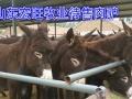 德州驴加盟 种植养殖 投资金额 1-5万元