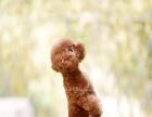 宠物摄影 宠物写真 人宠拍摄 狗狗写真 萌宠摄影