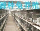 安哥拉长毛兔养殖技术