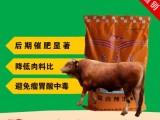 肉牛饲料预混合饲料添加剂牛催肥料