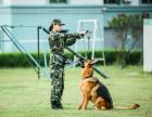 大连哪里有好的狗狗训练 哪就到训犬帮