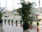 苏州虎丘绿植租赁哪里有,苏州小园丁园艺,拥有丰富的绿化租摆经